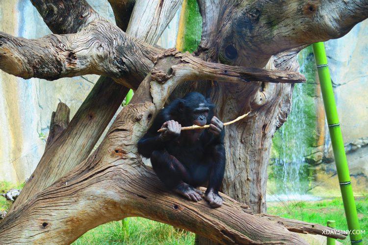 San Diego Zoo - XDAYSINY.COM