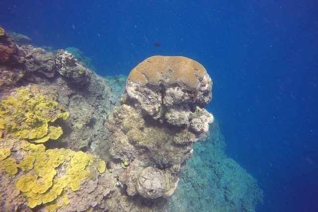 Snorkeling-Off-Tanna-Evergreen-Resort-In-Vanuatu-Coral-Pillar