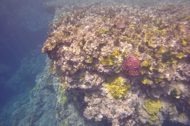 Snorkeling-Off-Tanna-Evergreen-Resort-In-Vanuatu-Volcanic-Reef