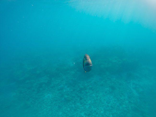 Snorkeling Rangiroa French Polynesia attacking fish approaching