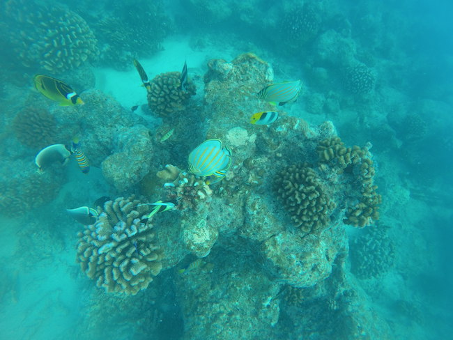 Snorkeling Rangiroa French Polynesia lagoon fish