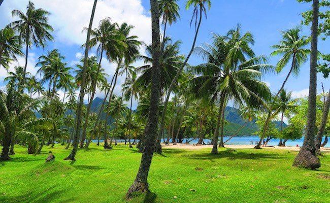 Ta'ahiamanu Mareto Beach Moorea French Polynesia palms