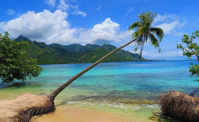 Ta'ahiamanu Mareto Beach Moorea French Polynesia tree