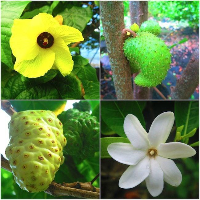 Tahuata Day Trip Hiva Oa Marquesas Islands French Polynesia Hapatoni village fruit