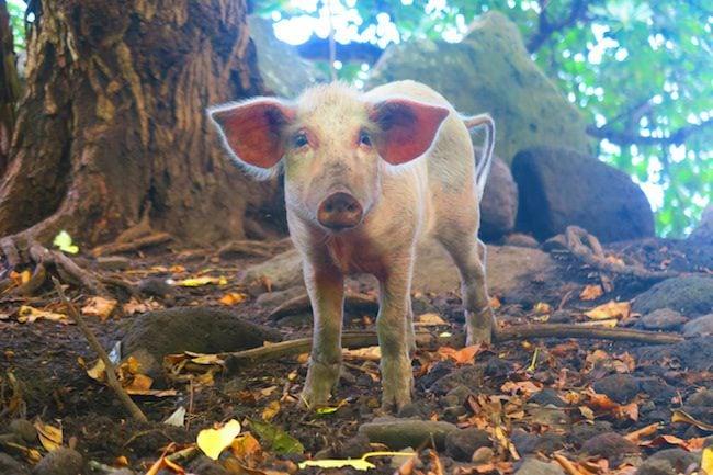 Tahuata Day Trip Hiva Oa Marquesas Islands French Polynesia Hapatoni village pig