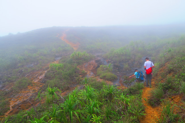 Temehani Plateau hike Raiatea Island French Polynesia hiking in clouds