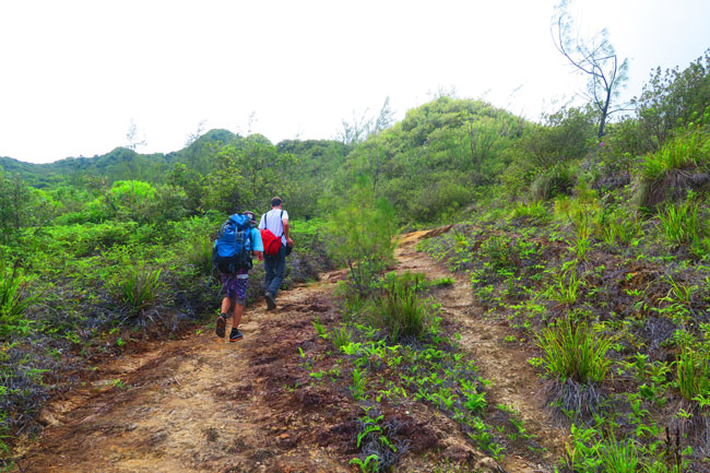 Temehani Plateau hike Raiatea Island French Polynesia hiking through barren forest