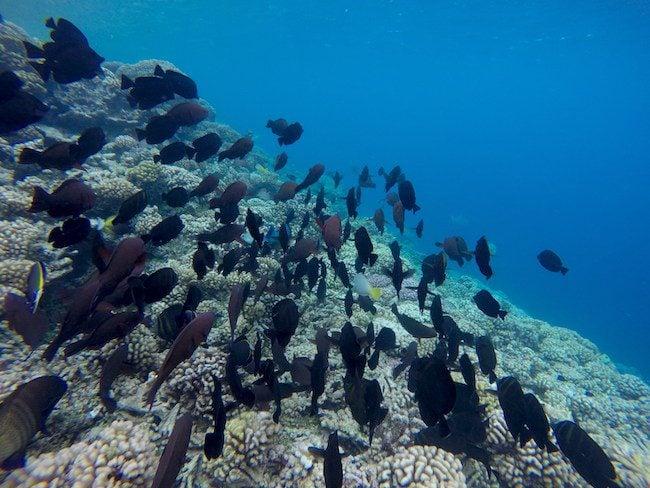 Tetamanu Village Fakarava Atoll French Polynesia snorkeling reef drop