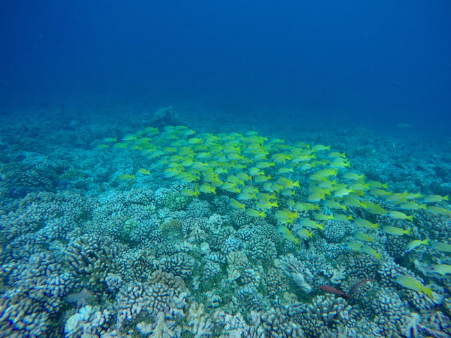 Tetamanu Village Fakarava Atoll French Polynesia snorkeling