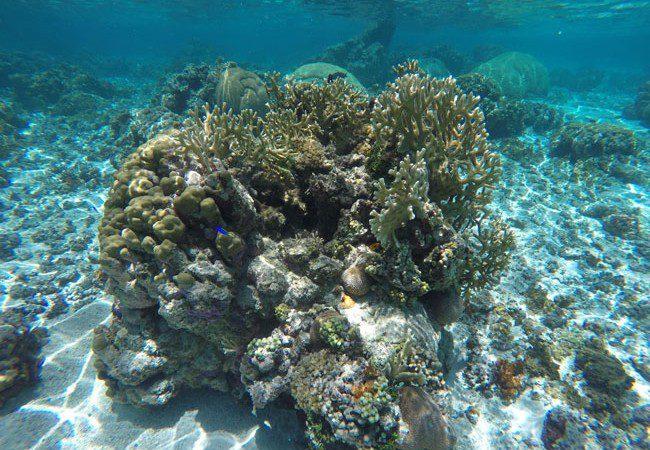 Tropical coral in Ofu Beach American Samoa