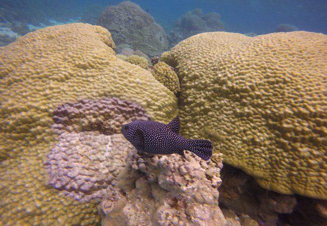 Tropical fish Ofu Beach American Samoa
