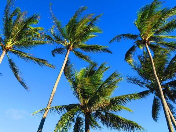 Wavecrest Resort Condos - Molokai Hawaii - palm trees