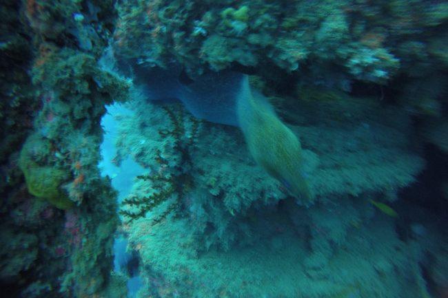 Wreck Diving SS President Coolidge Vanuatu