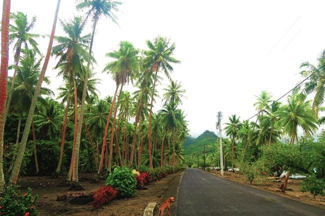 island tour tahaa french polynesia