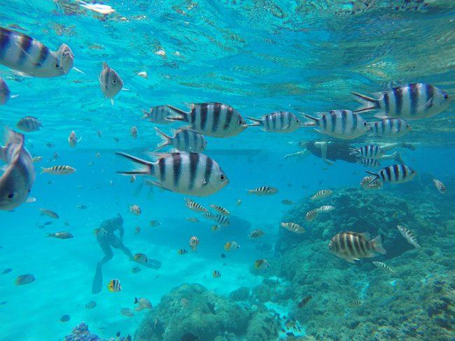 lagoin tour bora bora french polynesia coral garden tropical fish
