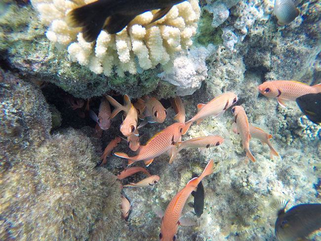 lagoon tour bora bora french polynesia coral garden