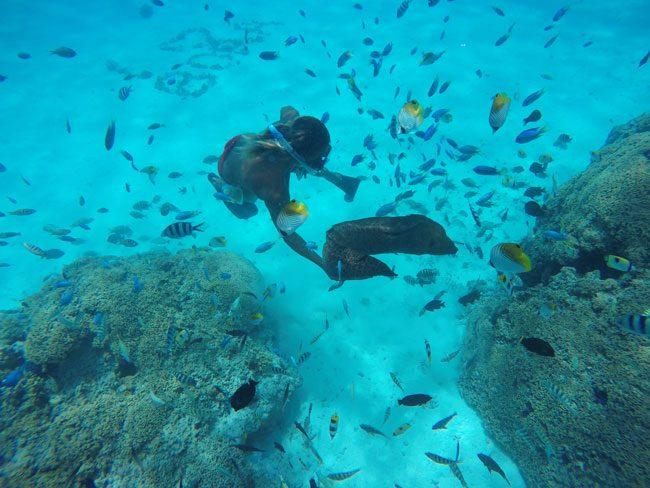 lagoon tour bora bora french polynesia moray eel out of hiding spot