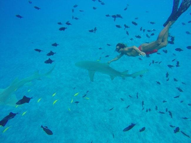 lagoon tour bora bora french polynesia swimming with lemon shark