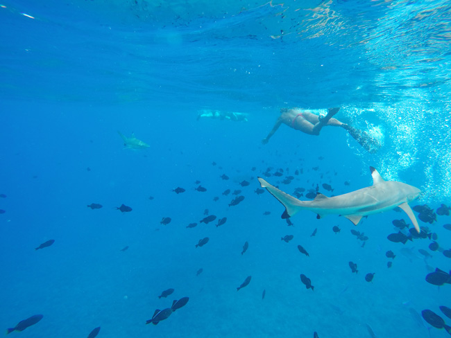 lagoon tour bora bora french polynesia swimming with sharks