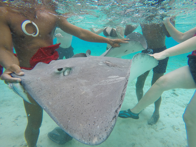 lagoon tour in bora bora french polynesia feeding stingrays