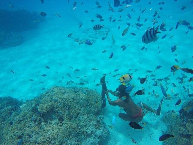 lagoon tour in bora bora french polynesia moray eel