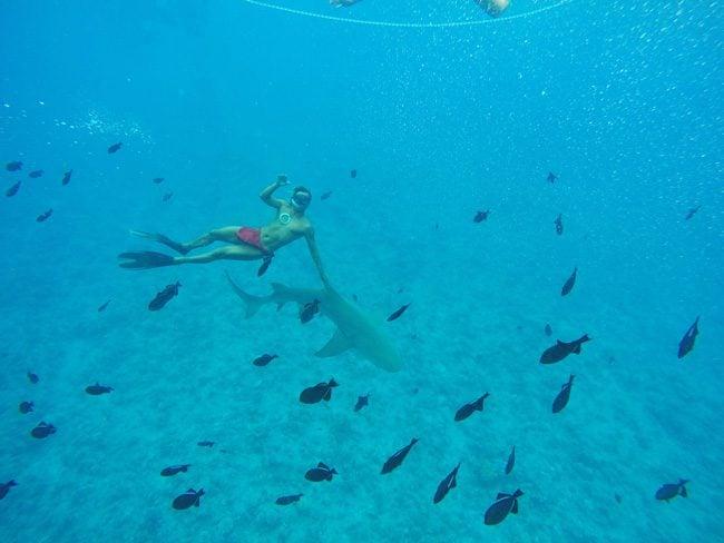 lagoon tour in bora bora french polynesia riding shark fin
