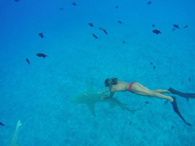 lagoon tour in bora bora french polynesia swimming with lemon shark