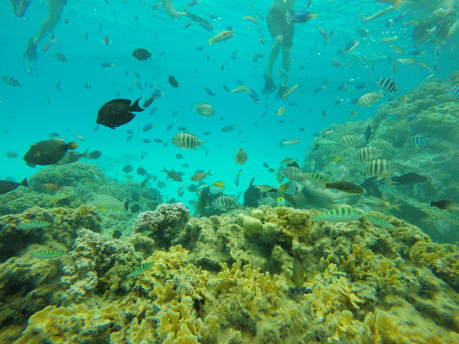 lagoon tour in bora bora french polynesia tropical fish feeding