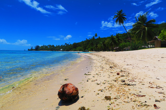matria beach bora bora french polynesia coconut on beach
