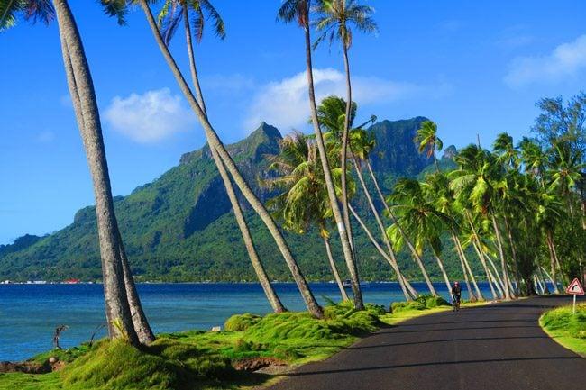 palm trees and mountain in bora bora french polynesia
