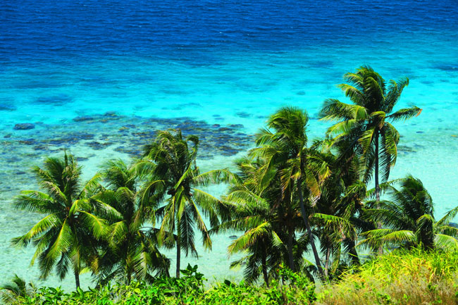 palm trees and turquoise water in bora bora french polynesia