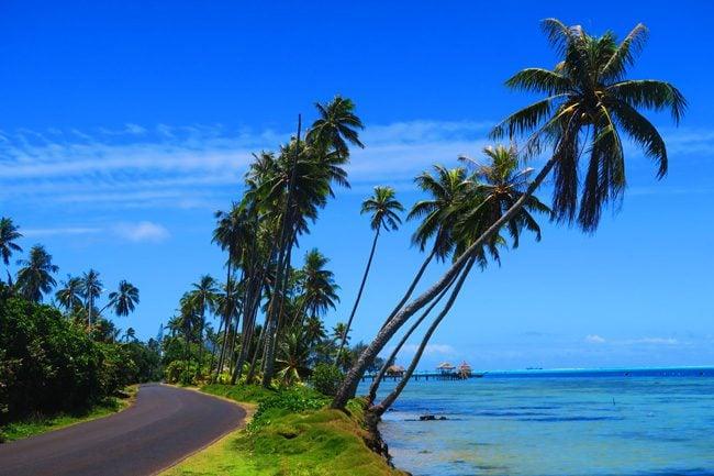 palm tress in bora bora french polynesia