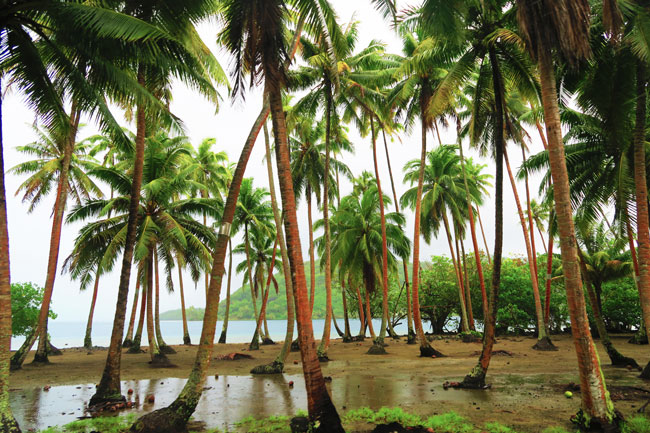 plam trees in rain storm island tour tahaa french polynesia
