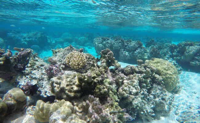 pristine coral garden le tahaa luxury resort french polynesia