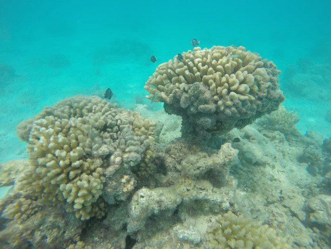 snorkeling-PK9-beach-fakarava-fish.