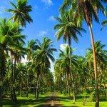 sunset beach motel endless palm trees Raiatea Island French Polynesia