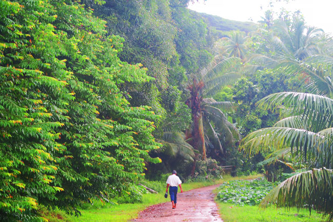 tahaa island tour man walking to church in rain