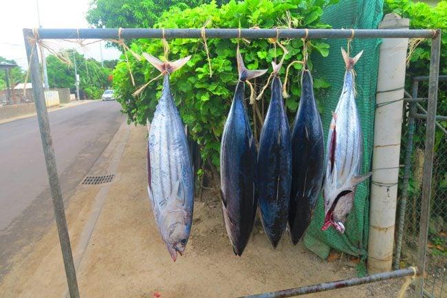 tuna in bora bora french polynesia