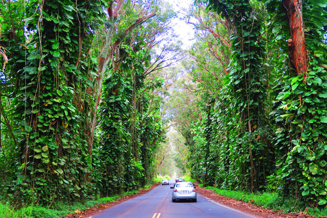 tunnel of trees Kauai - hawaii