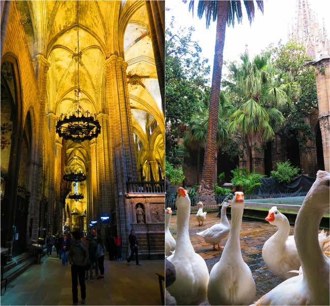 Barcelona Cathedral cloister and interior