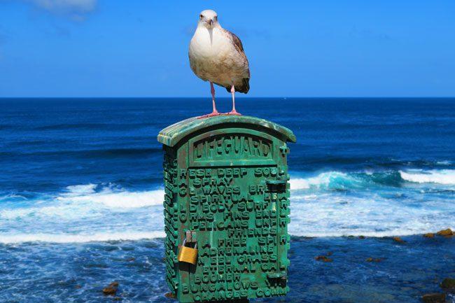 La Jolla beach bird closeup
