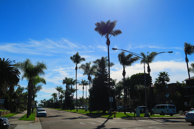 Palm trees in Cornado California