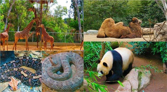 San-Diego-Zoo-Animal-Collage