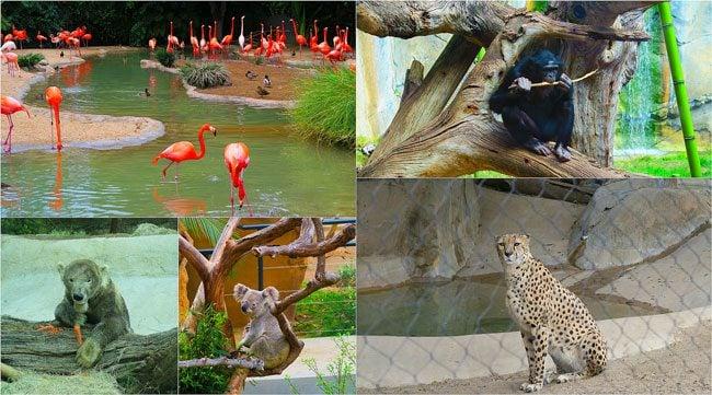 San-Diego-Zoo-Animal-Collage2