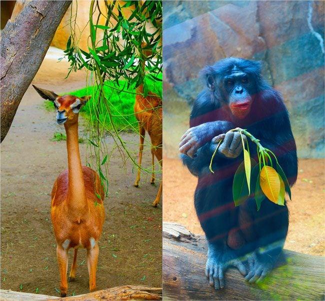 San-Diego-Zoo-Animal-Collage3