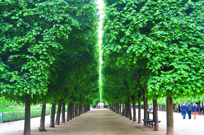 Jardins du palais royal paris x days in y for Jardins paris 2015