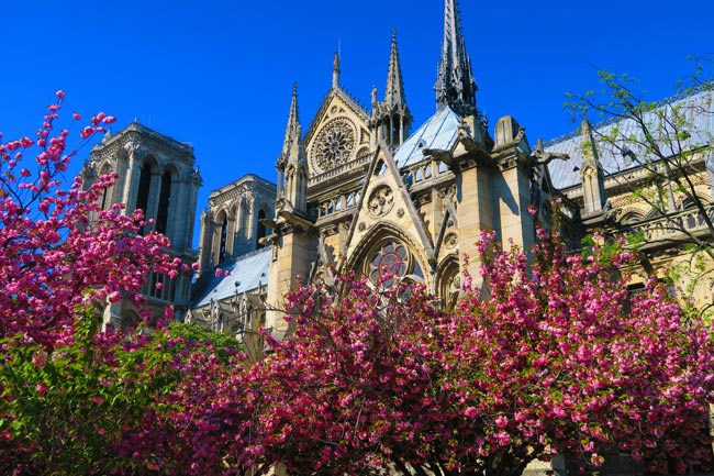 Notre Dam Cathedral paris spring cherry blossom
