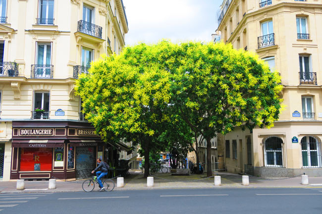 Latin Quarter Paris tree and bakery
