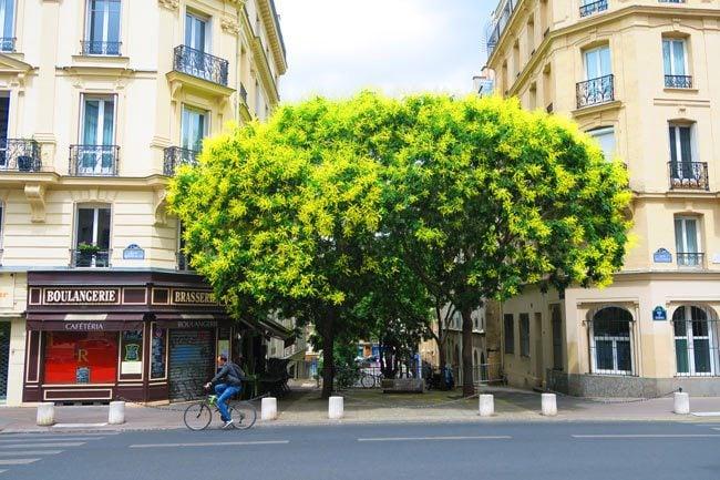 Latin Quarter Paris tree and bakery