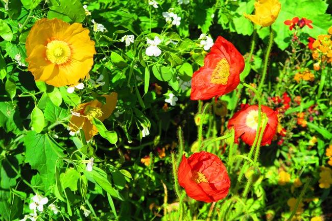 Monet garden Giverny closeup